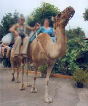 Camel Park Arona