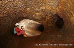 El Viento Sobrado Cave (Cueva del Viento Sobrado)