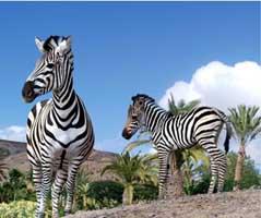Aquatic and Theme Parks in Fuerteventura