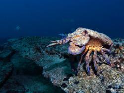 Diving in Fuerteventura