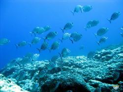 Scuba Diving La Palma