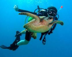 Diving in the Canary Islands